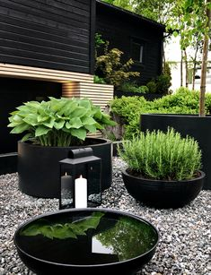 Black Garden, Lush Green, Backyard Landscaping, Modern Landscaping, Modern Landscape Design, Small Backyard Patio, Modern Design, Garden Projects, Outdoor Gardens