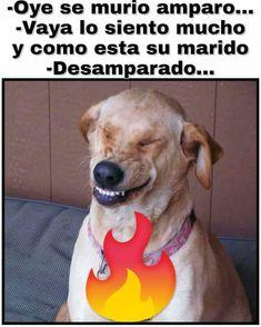 Stupid Friends, Labrador Retriever, Lol, Funny, Animals, Hilarious Pictures, Jokes, Free Downloads, Labrador Retrievers