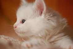 DSC_0012 by *lalalaurie, via Flickr