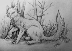 Warriors: Dawnpelt by Marshcold.deviantart.com on @DeviantArt