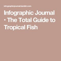 Infographic Journal • The Total Guide to Tropical Fish