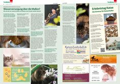 Tipps & Tricks zum Trinkverhalten von Katzen https://cat-competence.de/veroeffentlichungen-b2c/interview-wasserversorgung-von-katzen/