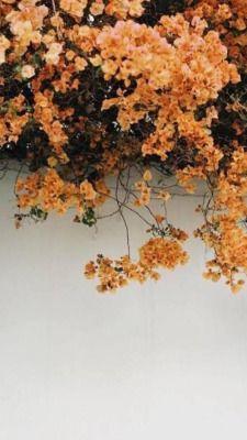 Late Summer Tumblr Spring Wallpaper Flower Wallpaper Tumblr Flower