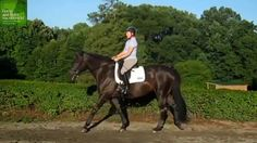 How to Apply the Half Halt In Transitions Dressage Hub