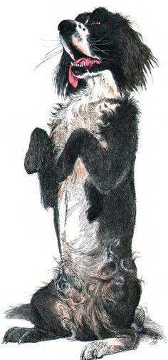 Kurt Tucholsky. Der Hund als Untergebener. Bilder: Klaus Ensikat