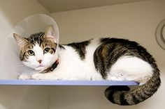 What Are Some Signs That My Cat Needs Emergency Care? Pale gums, Rapid breathing, Weak or rapid pulse, Change in body temperature, Difficulty standing,