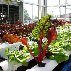 It's one thing to read about hydroponic gardening in your home and quite another to actually do it. Here are instructions for how to build a vertical indoor vegetable garden using hydroponics.