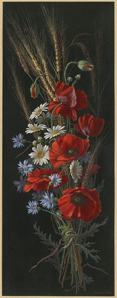 Poppy, Bachelors-buttons and Daisies | by Boston Public Library