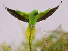aves voando - Pesquisa Google