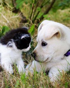 Cats and dogs. Gatos y perros Cute Baby Animals, Animals And Pets, Funny Animals, Kittens And Puppies, Cute Puppies, Tier Fotos, Cute Animal Pictures, Cute Creatures, Baby Dogs