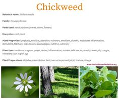Chickweed is a delicious and nutritive plant that brings cooling and moistening relief to hot and dry tissues, whether it's an inflamed eye, itchy skin, or irritated lungs. This plant is best used when fresh. Luckily for us, it grows readily in cool moist locations in disturbed soils and flourishes when it is harvest regularly.