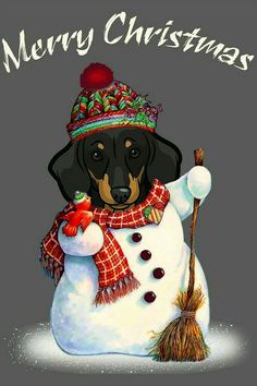 Dapple Dachshund, Dachshund Art, Dachshund Gifts, Dachshund Puppies, Dachshund Rescue, Christmas Dog, Christmas Humor, Merry Christmas, Christmas Dachshund