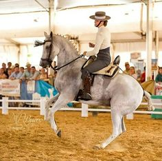 Marina Mesa con Pio Pio #domavaquera #sevilla #sevillahoy #coriadelrio #puebladelrio #doshermanas #lospalaciosyvillafranca #carmona #cordoba #jerez #fei #caballos #horse #andaluciaviva #hinojos #mairenadelaljarafe #huelva #elrocio #carmona #cordoba #alcaladeguadaira #ecija #almonte #andalucia #lebrija #villamartin