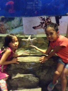 Ocean Park, Aquarium, Painting, Art, Fish Stand, Art Background, Fish Tank, Painting Art, Kunst