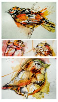 Abby Diamond: college student, observer of birds, super-skilled watercolor and ink artist… this girl is going to go places. I love the layered look in her pieces (watercolor painting + ink … Watercolor And Ink, Watercolor Illustration, Watercolor Artists, Cool Sketches, Ink Painting, Bird Art, Beautiful Birds, Painting Inspiration, Amazing Art