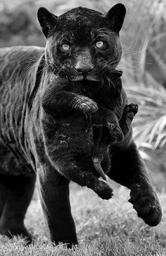 how beautiful. i hope this isnt from a zoo or something similar hopefully , she and her cub live wild......
