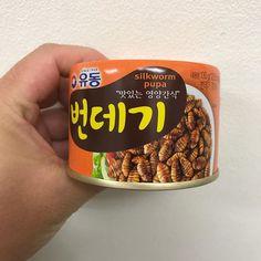 松下さん土産 韓国の虫 苦かった(T  T) #土産