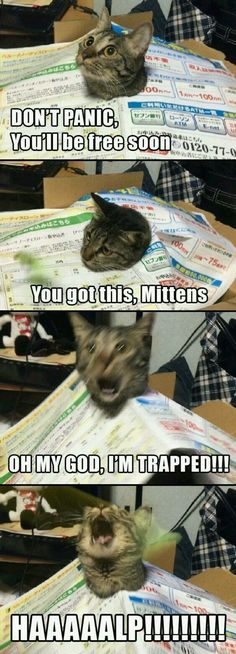 Funny Cats - Funny Animal Quotes - - Look at that second last phase the realisation The post Funny Cats appeared first on Gag Dad. Cute Animal Memes, Funny Animal Quotes, Animal Jokes, Funny Animal Pictures, Cute Funny Animals, Cute Baby Animals, Funny Photos, Zoo Animals, Funny Animal Fails
