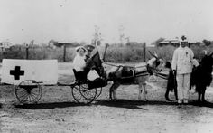 Children dressed up as soldiers and Red Cross doctors and nurses, on carts drawn by goat teams at Emerald ca. 1910s.