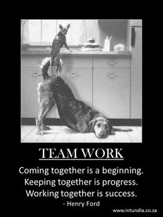 Teamwork Photo: This Photo was uploaded by sfiolek. Find other Teamwork pictures and photos or upload your own with Photobucket free image and video hos. Love My Dog, Puppy Love, Animals And Pets, Funny Animals, Cute Animals, Animals Images, Smart Animals, Funny Dogs, Cute Dogs