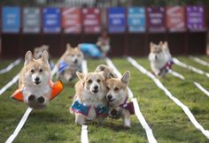 Royal Baby Name Revealed... If These Racing Corgis Have Any Say In The Matter