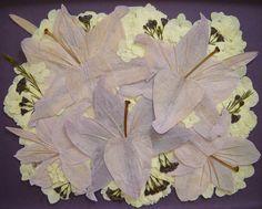 Floral Preservation ~ Lavender Lillies ~ Pressed Flower Art ~ Pressed Garden ~ Annie Fentz Smith ~ www.pressedgarden.blogspot.com