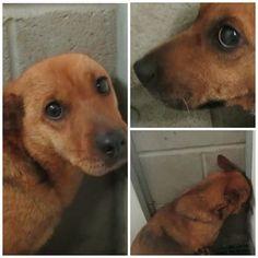 Terrified canine sisters at North Carolina 'kill' facility