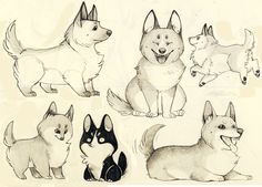 CORGIS ARE NATURES GREATEST WARRIORS by ~LEPPU on deviantART