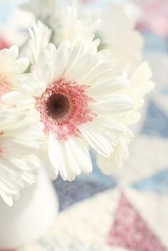gerbera blanc coeur rose / white and pink gerbera My Flower, White Flowers, Beautiful Flowers, Colorful Roses, Cut Flowers, Daisy Love, Pink Daisy, Pink Gerbera, Gerbera Flower