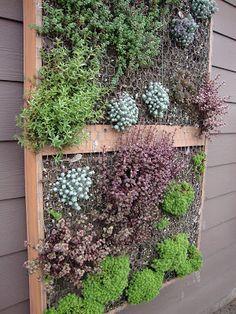 "danger garden: The ""other"" Portland Nursery"