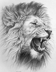 Lion. Art. Pen. Angry.