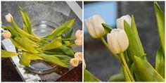 DIY N°3 Celery, Vegetables, Plants, Diy, Food, Beautiful Things, Nice Asses, Bricolage, Essen