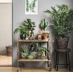 Green plant decoration #urbanjungle #green #indoorplants