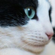 #cat #melaniedelon