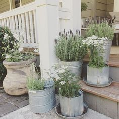 Lavender in pails on porch