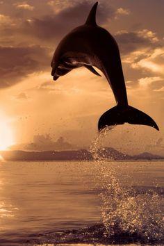 agua... 'delfinada'