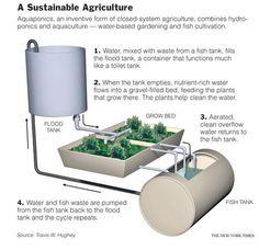 Aquaponics    ideal para un estanque en casa :D
