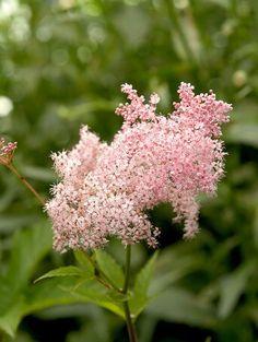 barrenwort Meadow Garden, Cottage Garden Plants, Dream Garden, Cut Flowers, White Flowers, Beautiful Flowers, Perennial Geranium, Flower Pot Design, Sea Holly