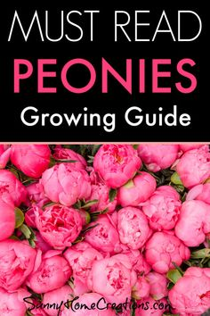 Must Read Peonies – Growing Guide Awesome tips and advice on how to grow and care for peonies. Great info on planting peony roots so you don't plant your peony flowers too deep. Peonies are beautiful and smell wonderful when they bloom. Cut Flower Garden, Flower Farm, Peony Flower, Flower Pots, Peony Plant, Cactus Flower, Flower Gardening, Hibiscus Flowers, Growing Peonies