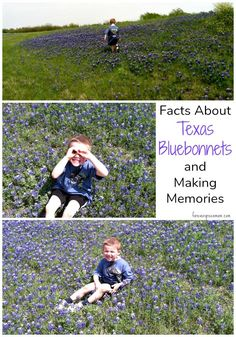 Photos galore are taken each year in the field of bluebonnets. Know the real facts about Texas Bluebonnets. Dallas Fort Worth Texas, Texas Bluebonnets, Real Facts, Texas Travel, Blue Bonnets, Making Memories, Outdoor Adventures, Outdoor Projects, Road Trips