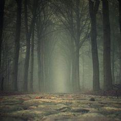 Soll ich stehen bleiben und darauf warten, dass mich derjenige, der mich hier abgesetzt hat, wieder abholt, oder soll ich weiter gehen? Gehen heißt wohl kriechen, und ich werde nicht schnell voran kommen, und die Bäume sehen nicht nur unendlich groß, sondern irgendwie auch angriffslustig aus. Vielleicht kann ich mich schlängeln, ja.