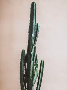 Der Kaktus ist wieder in – Pflanzenfreude.de