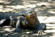 Excursions Indonésie - Découverte du parc National Komodo | Evadili