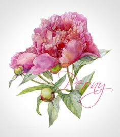 The process of creating a watercolor peony. Object for pattern, postcards, packaging.