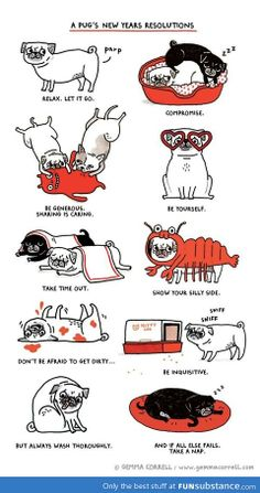 A pug's 2014 resolutions