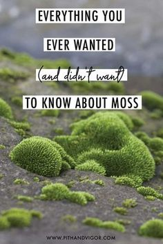 Everything You Ever Wanted (and didn't want) to Know About Moss - Gardening Tips Shade Garden, Garden Plants, House Plants, Air Plants, Cactus Plants, Outdoor Plants, Outdoor Gardens, Indoor Herbs, Outdoor Spaces