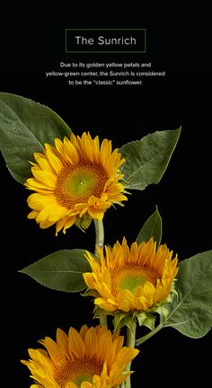 191 Best Beautiful Flower Photography Images Beautiful Flowers