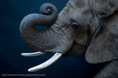 Open Eye Photography Blog: Joel Sartore Photography