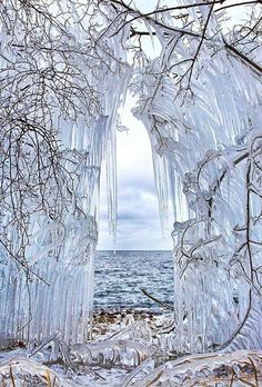 Frozen trees in Lake Baikal Siberia, Russia