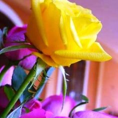 Jumma Mubarak Pic 2018 Images With New Collection Beautiful Jumma Mubarak, Images Jumma Mubarak, Good Night Quotes Images, Happy Sunday Morning, Everlasting Love, Holy Ghost, Lord And Savior, Names Of Jesus, Yellow Roses